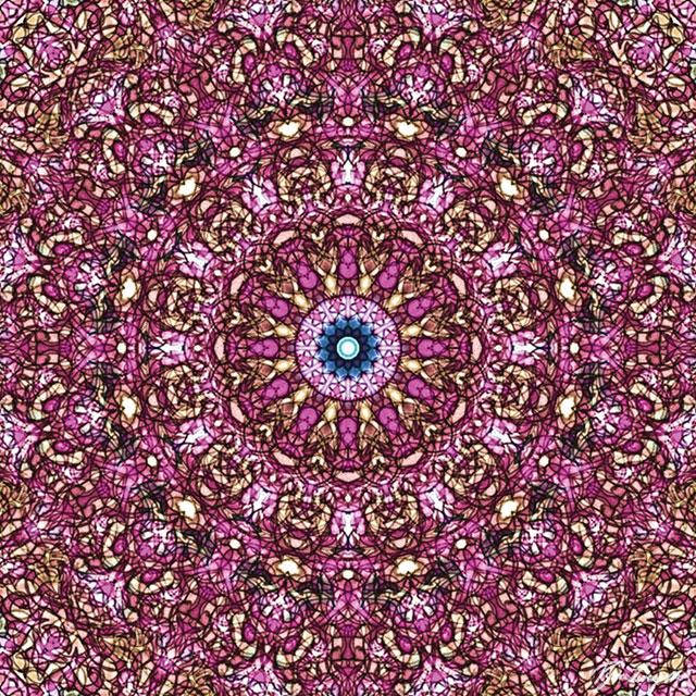Floral-Core-web